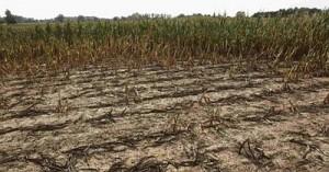 Цены на прдукты могут вырасти из-за засухи