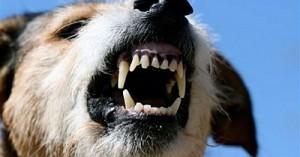 Сторожевая собака загрызла 3-летнего ребенка