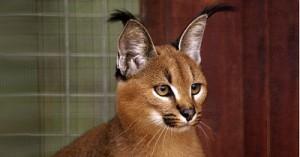 Грабители украли у москвички котенка стоимостью 400 тысяч рублей