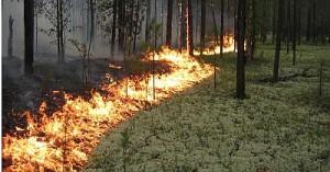 Из-за пожаров введен режим чрезвычайной ситуации в Красноярском крае